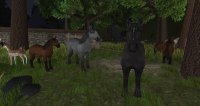 Brown, grey, and black horses